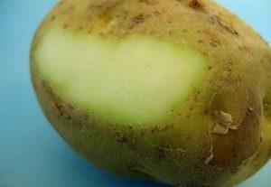 Соланин в картофеле - что это и как избавиться