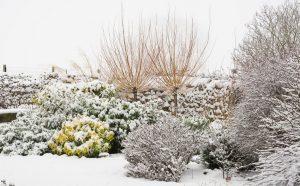 Красивые растения для сада зимой - cад с волшебной атмосферой