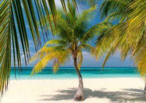 Кокосовая пальма - как правильно вырастить кокос
