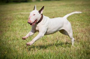 Собака в стрессе = непредсказуемое поведение