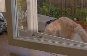 Уход за пожилой кошкой - что нужно знать