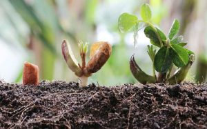 Как вырастить рассаду