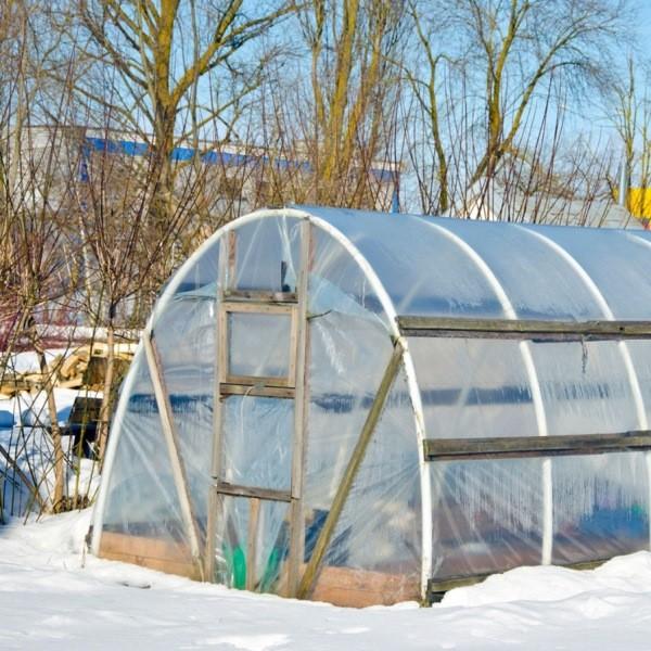 Выращивание овощей зимой в теплице - полезные хитрости