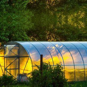 Выращивание в теплице для получения раннего урожая