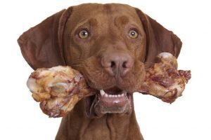 Какие термообработанные кости могут нанести вред собаке