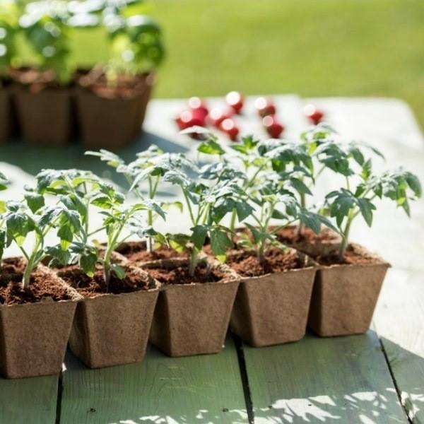 Рассада томатов в домашних условиях - как вырастить качественную