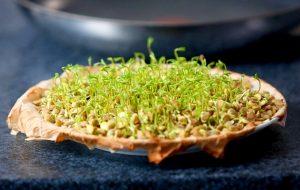Как проращивать семена микрозелени