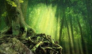 Гороскоп друидов - какое дерево соответствует вашему знаку зодиака