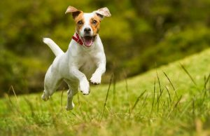 Настоящие причины, почему собаки виляют хвостом