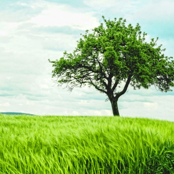 Целительные свойства деревьев в лечебной практике