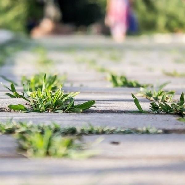 Как избавится от травы между тротуарной плиткой