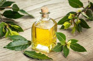 Производство лечебного масла из лаврового листа