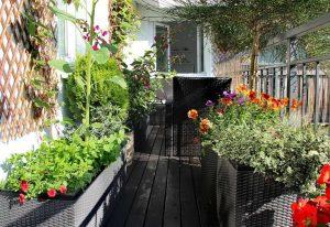 Что можно выращивать на балконе или террасе