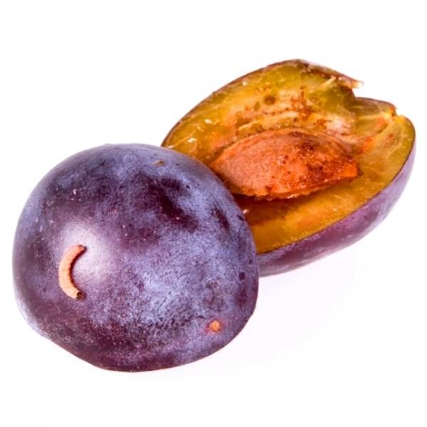 Обработка сливы от червей в плодах