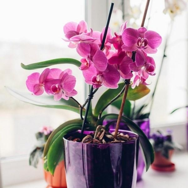 Размножение орхидеи листом в домашних условиях