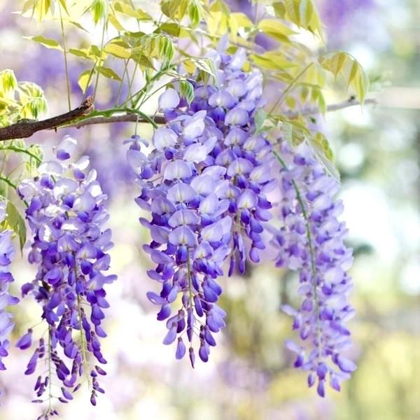 Самые ароматные цветы - Топ 15