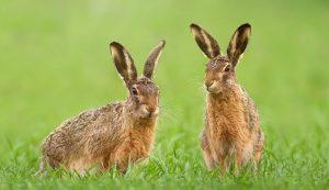 Защита от зайцев: способы защиты участка