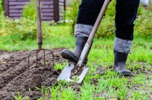 Зелёный гороскоп: какой вы садовник по гороскопу