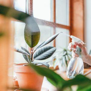 Как избавиться от вредителей на комнатных растениях