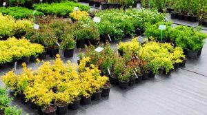 Саженцы растений из питомника