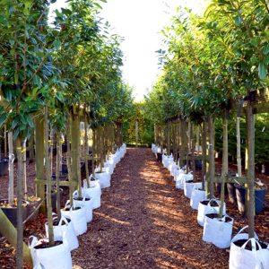 Саженцы растений из питомника – выбираем правильно