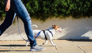 Поводок и ошейник для собаки