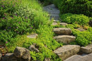 Где использовать камни в саду?